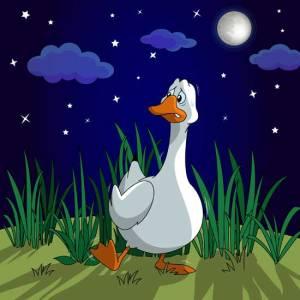 Duck Color pg29_limp
